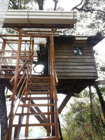 Earth Lodge Tree House