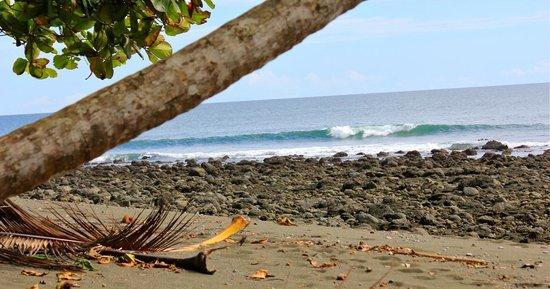 Finca Exotica Ecolodge: Surfen - ein bisschen was geht immer :)
