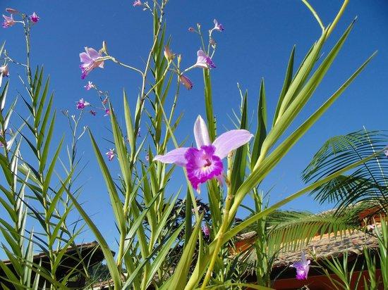 Pousada Quatro Estacoes: Orquídea