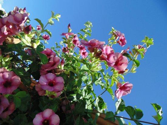 Pousada Quatro Estacoes: Flores na fachada