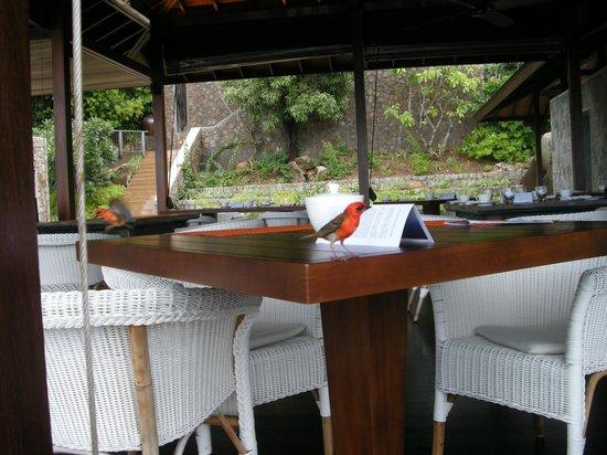 Four Seasons Resort Seychelles: НА ЗАВТРАКЕ