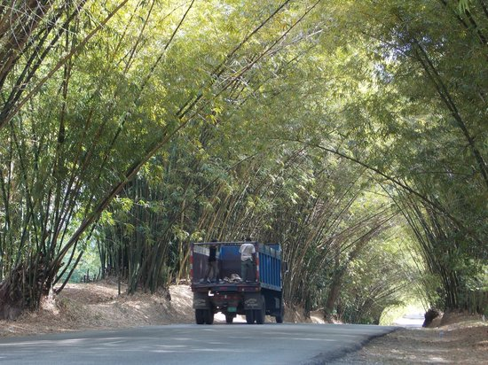 Everald's Jamaica Private Day Tours: bamboo avenue