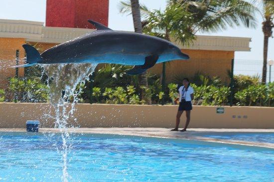 Barcelo Maya Colonial: delfinario hotel