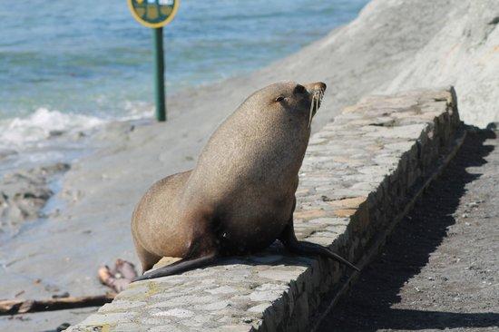 Colonia de focas: Kaikoura Peninsular Seal Colony