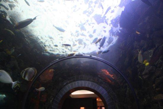 Outside View Picture Of Dallas World Aquarium Dallas