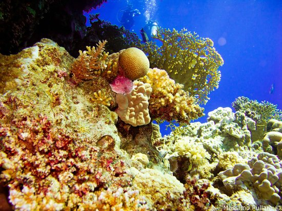 Subacquei Clandestini CCF Sharm
