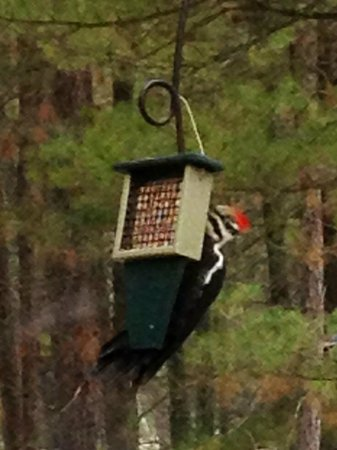 Sleeping Fawn Resort & Campground: wide variety of bird watching.