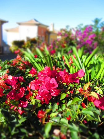 Palheiro Village: Flowers in Village