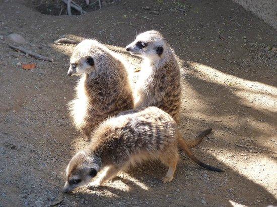 San Diego Zoo : Animal