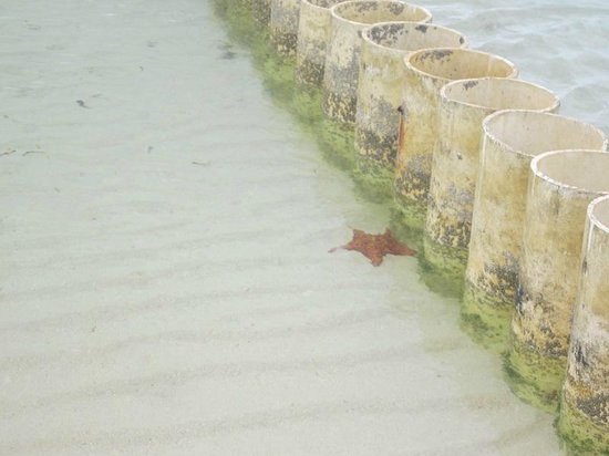 The Retreat at Rum Point: Starfish at Starfish Point
