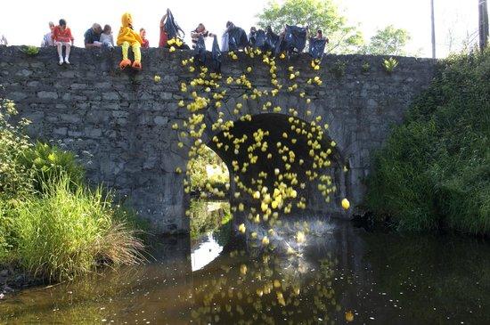 Basil Sheils: Charity Weekend Duck Race, Tassagh Bridge