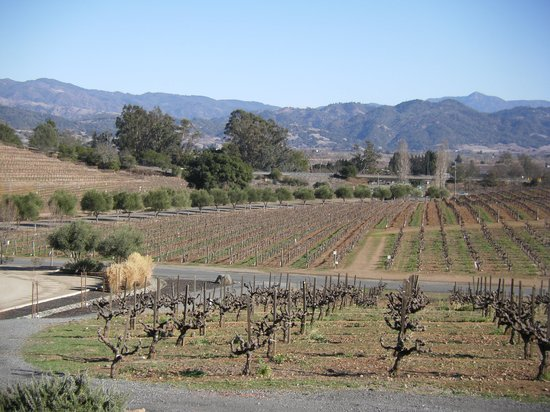 RUSTIC at Francis Ford Coppola Winery: Panoramic View