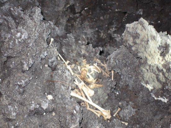 Kula Kai Caverns: Dead bird