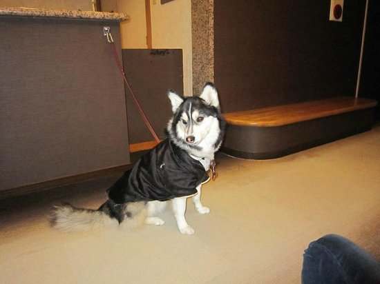 Aikento Tanoshimu Designers Hotel Dear Dog Izu Nagaoka : 支配人のメイトくん