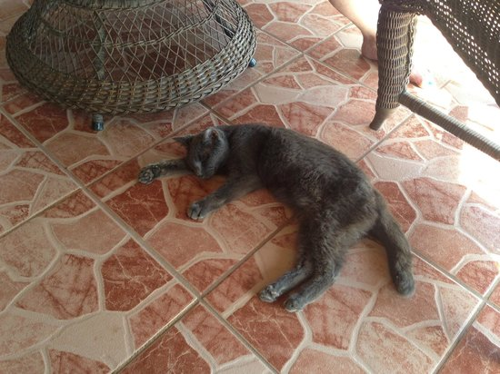 Villa Mango: Resident feline