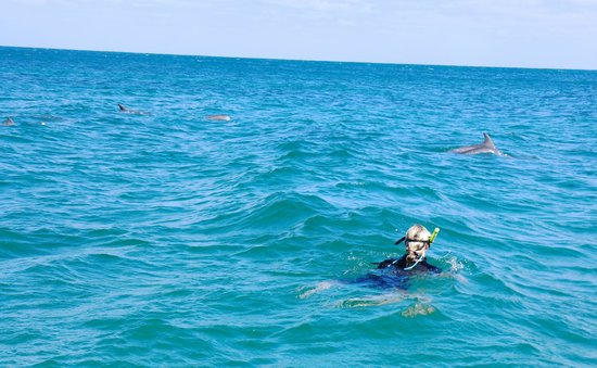 """Kangaroo Island Marine Adventures: My daughter stated,"""" it was the best experience"""""""