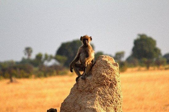 The Hide: King of the termite mound