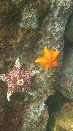 Baja Blue Diver : Varied colorful sea stars