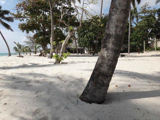 Amani Tiwi Beach Resort : BEACH