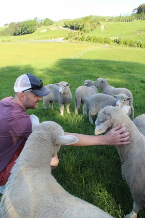 Lakeview Heights Farm Stay: Petting the sheep