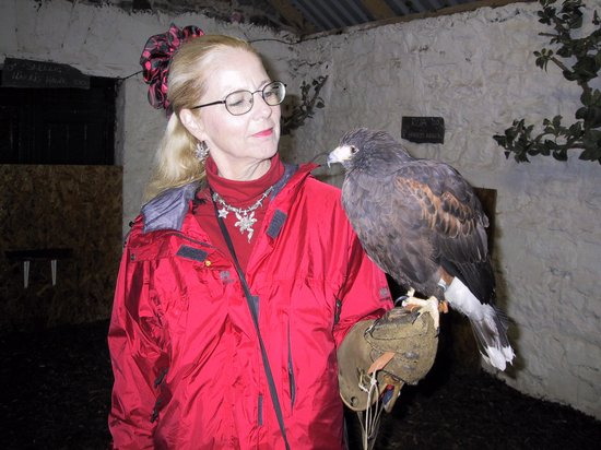Ashford Castle : My wife watches her Harris hawk before the hunt