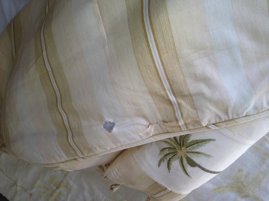 Madeira Bay Resort: torn worn out bedding