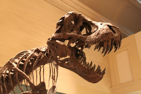 National Museum of Natural History: Teeth from the Past