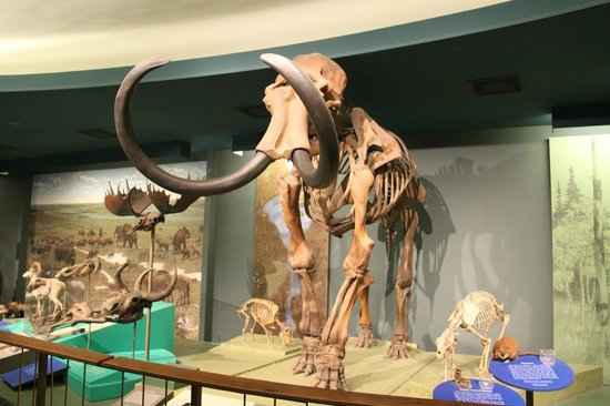 National Museum of Natural History : Mammoth