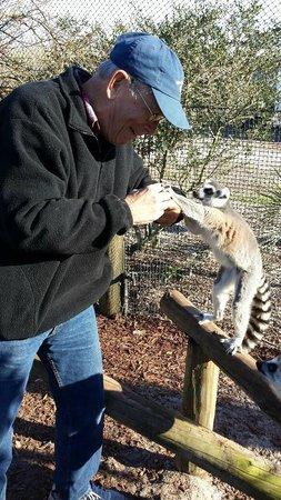 Safari Wilderness: Feeding a lemur