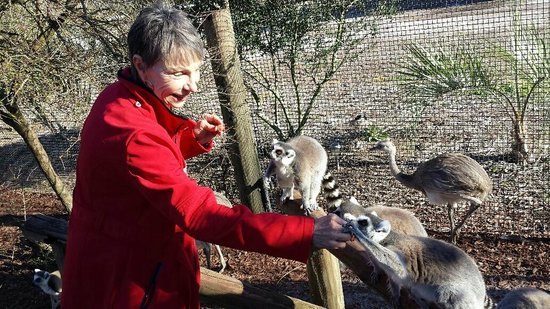 Safari Wilderness: We were given grapes to feed the lemur