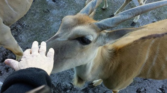 Safari Wilderness: What a treat to feed these animals