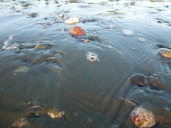 Iguana Lodge: Receding tide
