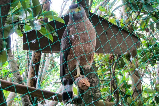 Crystal Cove Island: Beautiful bird
