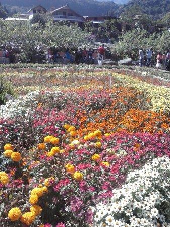 Parque Cervantes: feria de las flores,boquete