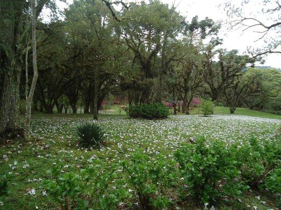 Parque Estadual do Caracol: Chegada ao parque