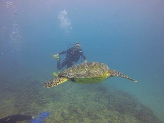 Oahu Diving: great spot!