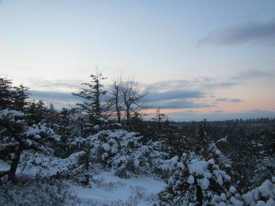 Minnewaska State Park Preserve: Treeline