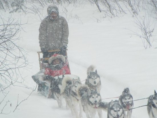 Us driving the sled - Picture of Escapade Eskimo, Otter Lake