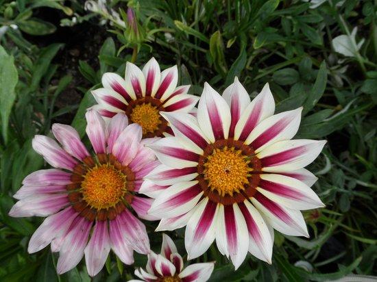 Hacienda Jurica: flores