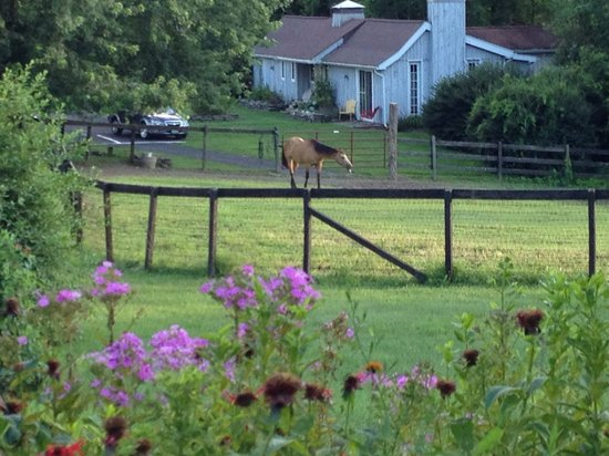 WhistleWood Farm Bed and Breakfast: A view from the front porch