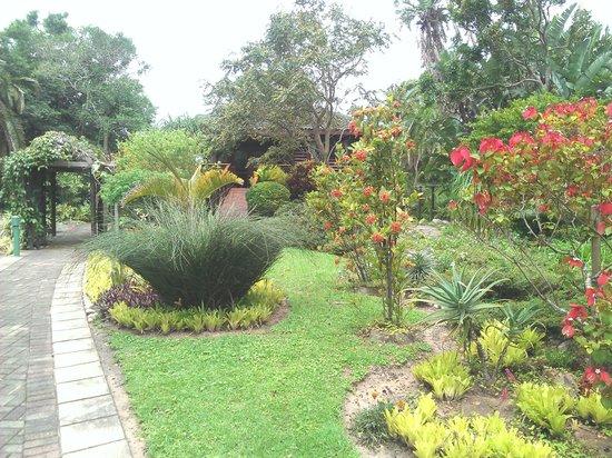Clivia Self-Catering: garden