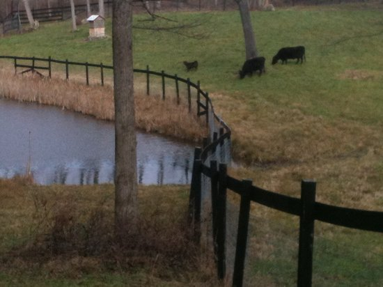 WhistleWood Farm Bed and Breakfast: Our trail to the pond and pasture