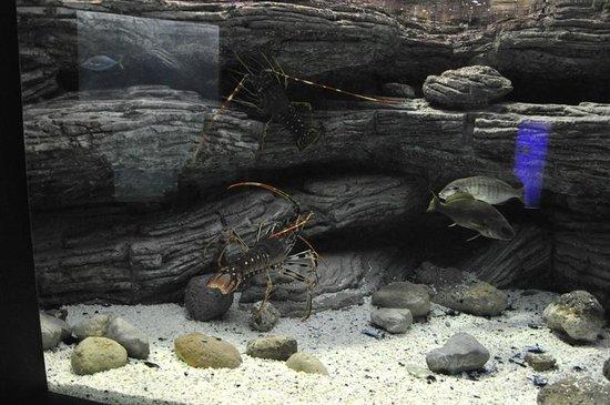 Cretaquarium Thalassocosmos : Океанариум Aquarium