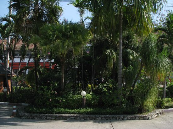 Palm Garden: Opposite the enterance