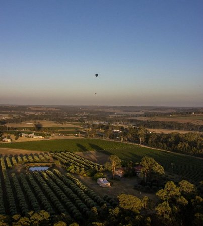 Balloon Aloft Hunter Valley Day Tours: View from the balloon.
