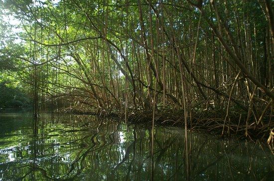 Sainte Rose, Guadeloupe: Rivière Moustique