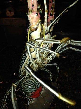 Kan Eang@Pier Restaurant: Какое-то морское чудовище из предлагаемых к ужину)))