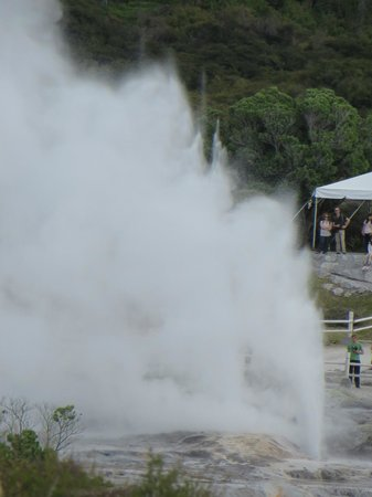 Pohutu Lodge: geyser from the reserve behind