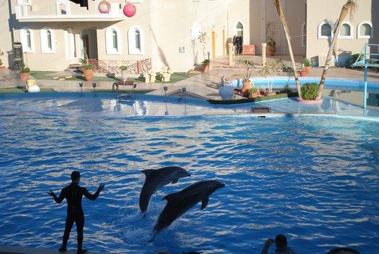Dolphina Park: dolphins
