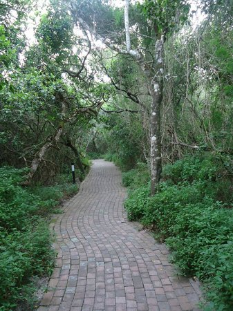 Grootbos Private Nature Reserve : Pathway leading to rooms